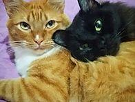 Cheddar e Mimi