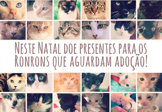 gatinhos_banner