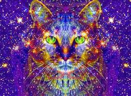 espiritualidade-gatos