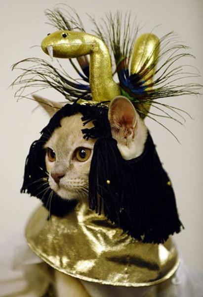 fantasia-para-gatos