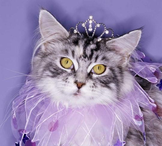 gata-princesa-1024x925