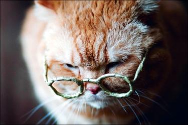 gato-idoso