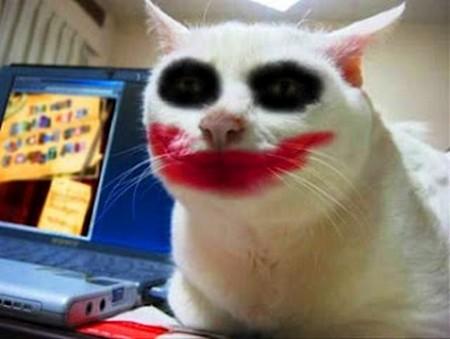gatos-fantasiados-004-joker
