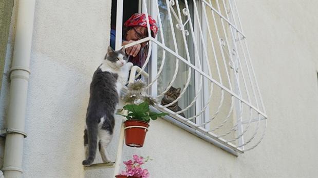 escada-para-gatos-de-rua-na-turquia-1