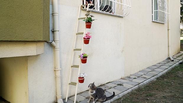escada-para-gatos-de-rua-na-turquia-2