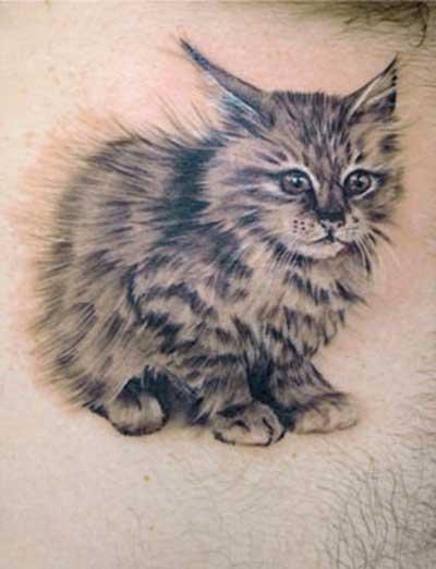 gato-realista