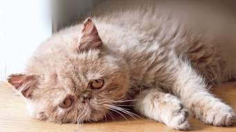 Como-lidar-com-a-intoxicação-de-cães-e-gatos