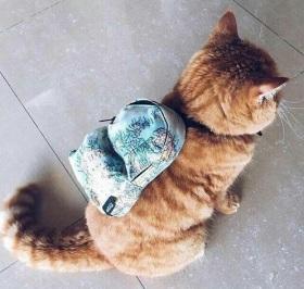foto-graciosa-gato-mochila-mapamundi-1