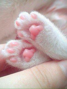pata rosa