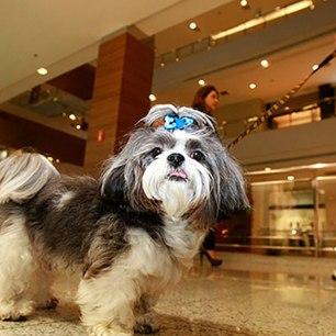 cachorro-shopping
