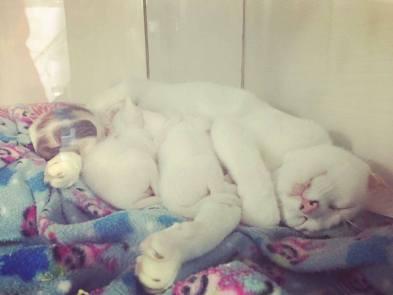 família baunilha dormindo no ninho do lar do ronrom