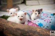 foto 4 - bebês baunilha