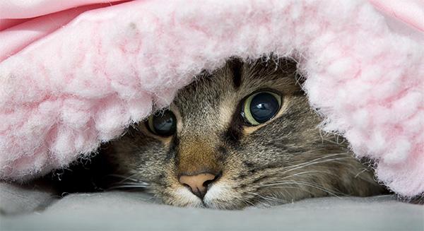 gato-agasalho-campanha
