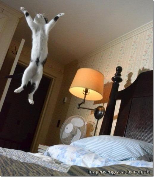 gato-feliz-pulando
