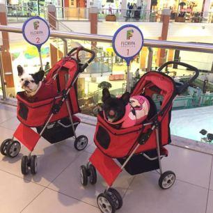 Petcar criado pelo Floripa Shopping