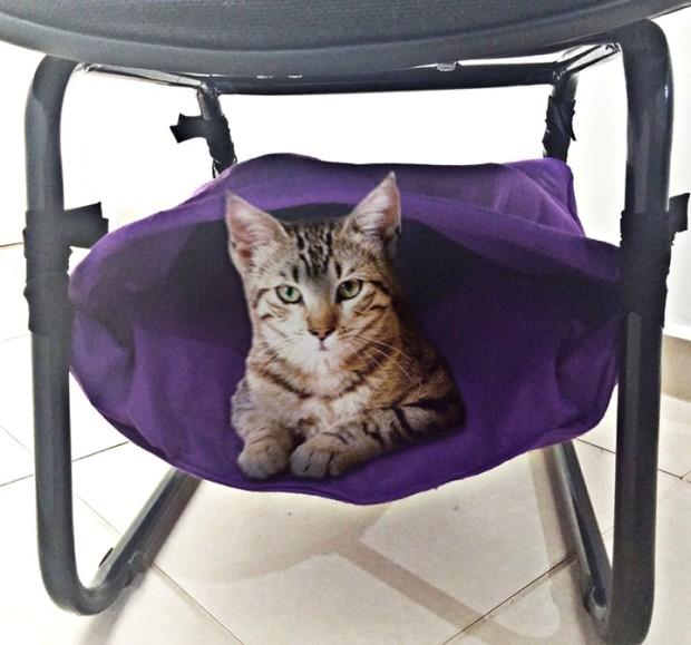 gato_rede_coberta