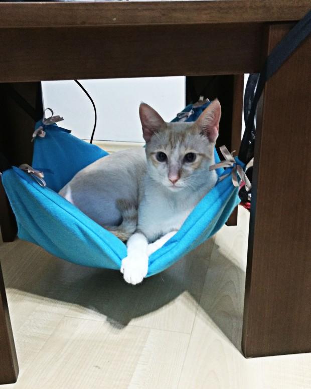 gato_rede_estofada_azul