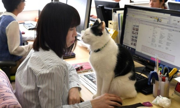 67852449_This-May-16-2017-picture-by-AFPBB-News-shows-a-cat-at-an-IT-office-in-TokyoWorkaholic-Japan