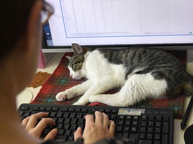 Gatos-en-la-oficina-03