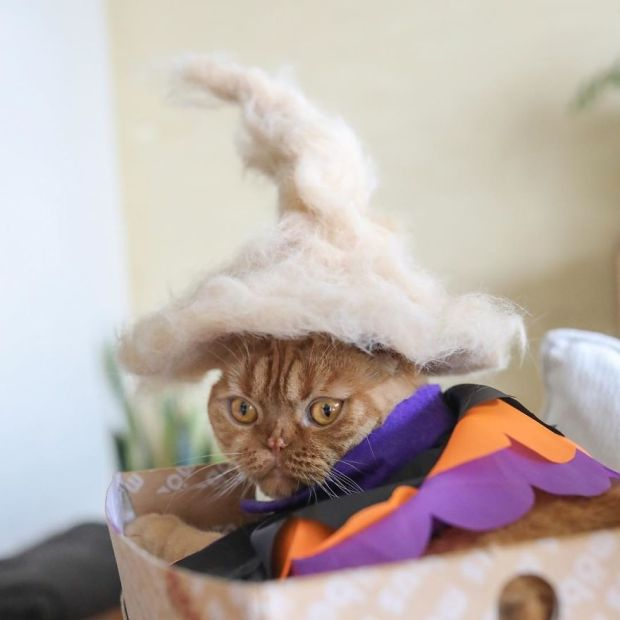 Cats-in-hats-made-from-their-own-hair-582ebf89d199e__880