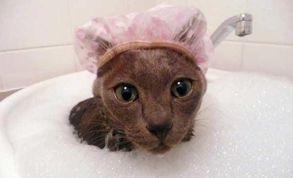 como-dar-banho-no-seu-gato-gato-miando-148