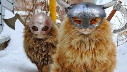 gatos-vikings