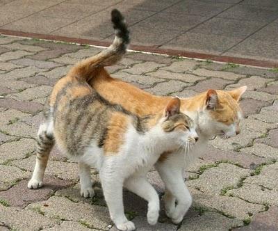 gatosesfregar