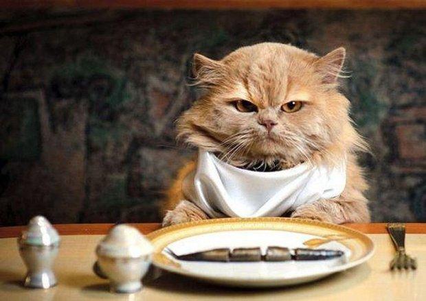 gato comendo atum