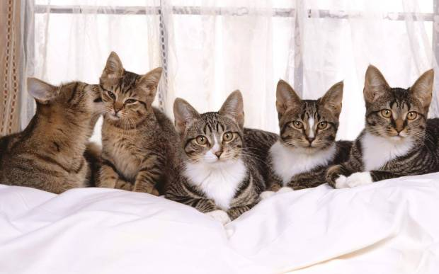 253567-cats-small-family-happy-family