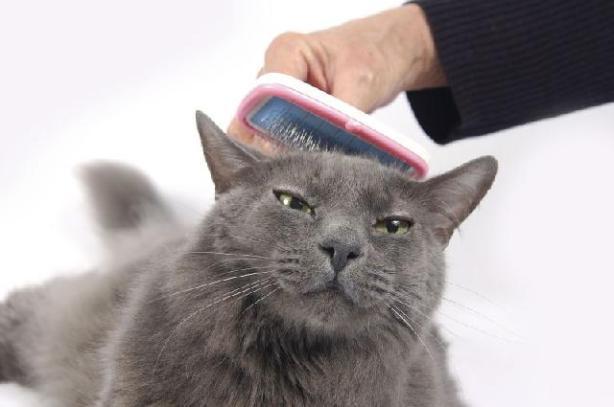 cat-grooming