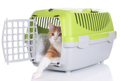 como-fazer-seu-gato-nao-estranhar-sua-caixa-de-transporte-pdc1-500x339