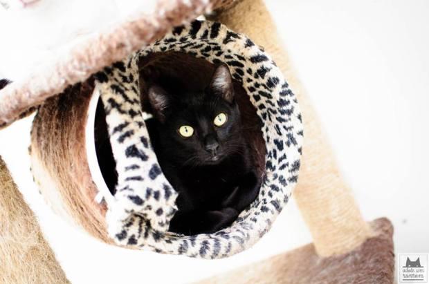 gato-preto-ronrom2