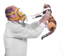 Alergias-Em-Gatos-2