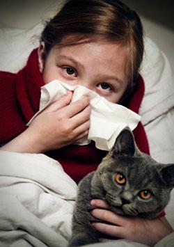 cat-allergy1