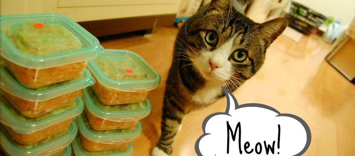 Fonte: Blog do gato