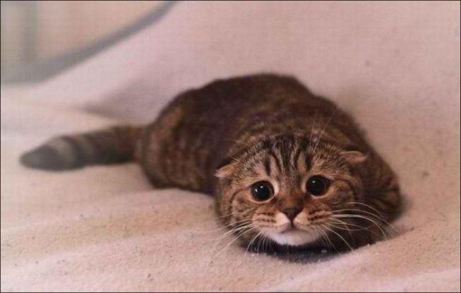 gato-medo