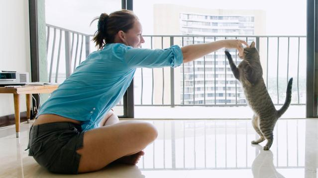 what-every-owner-should-train-their-cat-to-do