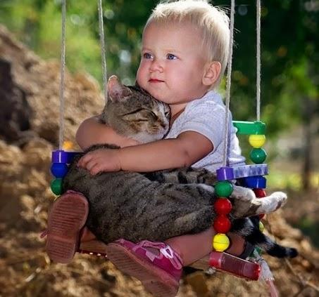 bebe e gato - gato mania