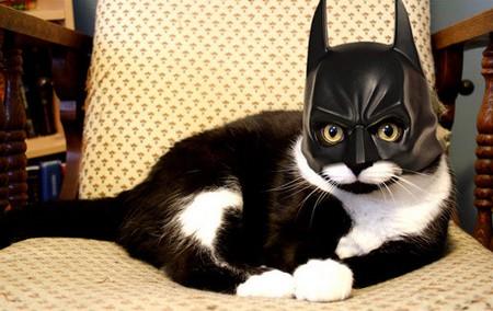 Gatos-Fantasiados-000-Batman