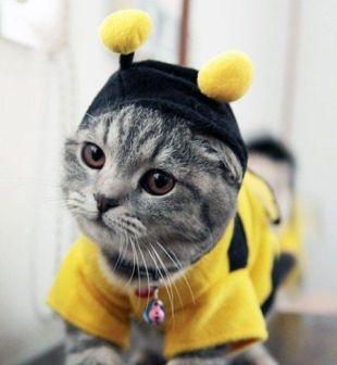 Halloween_gato_3