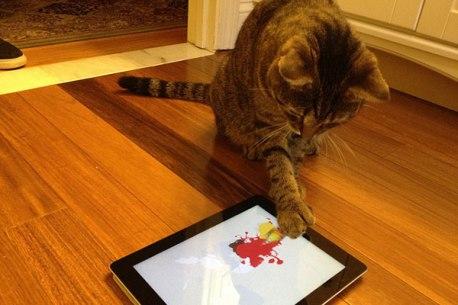 apps-para-gatos-2