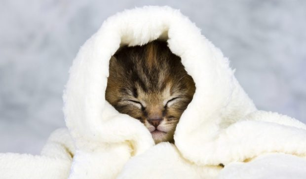 home-remedies-for-cat-colds-1130x662[1]