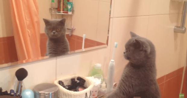 Cat-Mirror-1140x600[1]