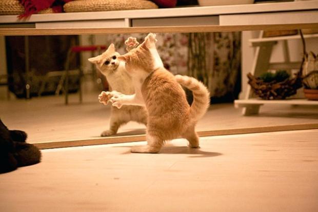 cat-mirror-h-t-draper-cat-sees-self-in-mirror-gif.jpg