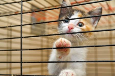 14575885-kittens-in-a-cage[1]