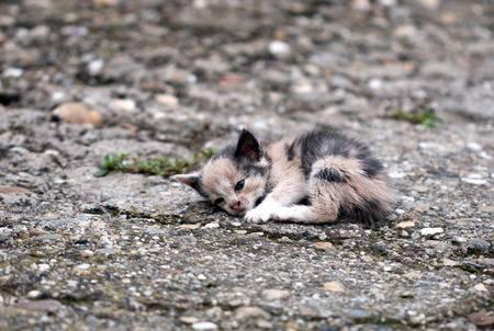 32326071-abandoned-kitten-lying-on-the-ground[1]