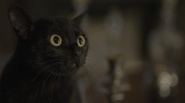 20806e8f9 O Verdadeiro Astro de  O Sétimo Guardião   o Gato León – Blog ...