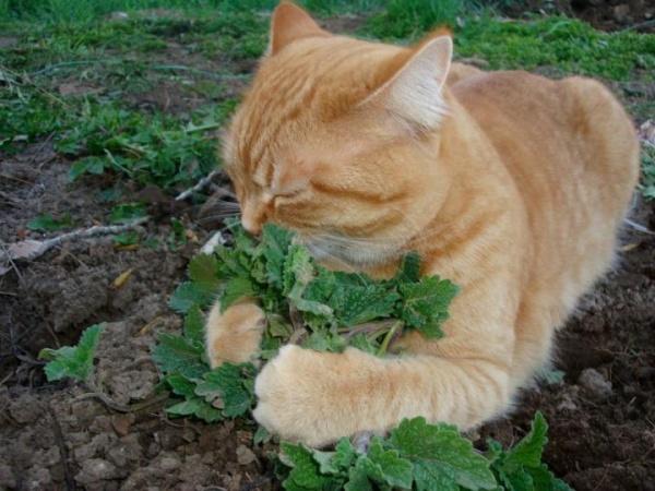 cat-and-catnip[1]